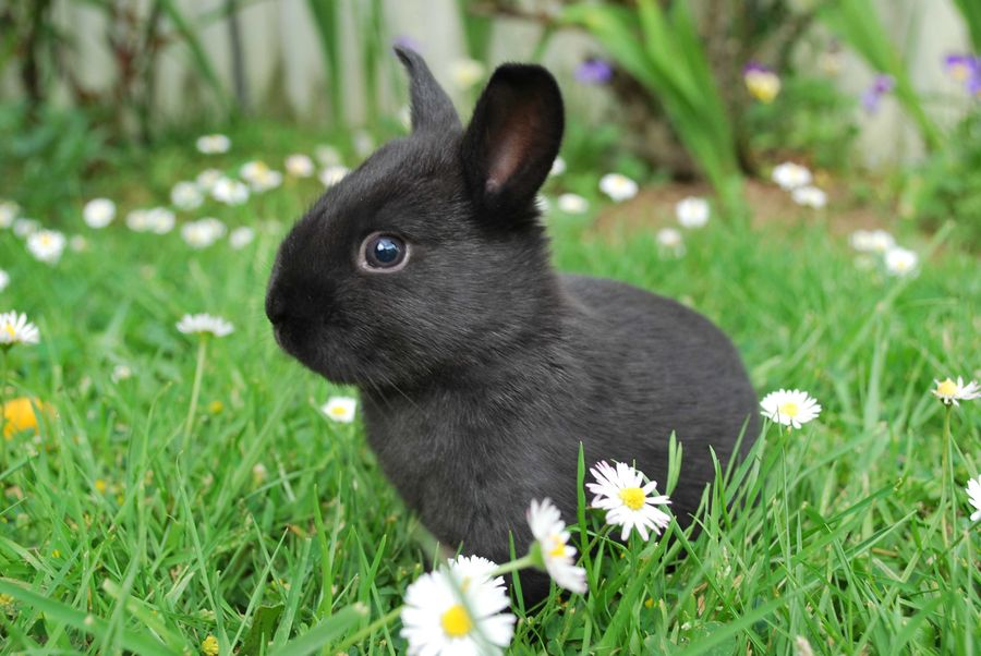 baby bunny ventures outside