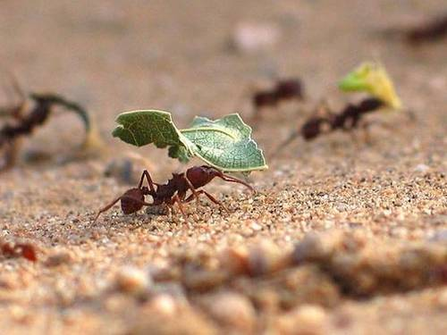 Working ants - photo#1