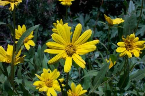 Yellow wildflowers mightylinksfo