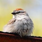 A Wet Little Bird