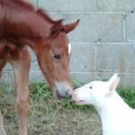 Foal & Dog