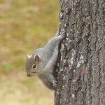 Squirrel Peekin