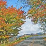 Autumns Splendor