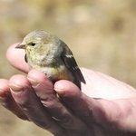 Shutterbug's Finch