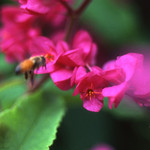 Impressionist Bee