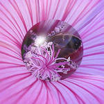 Bee pink legs & feelers etc magnified