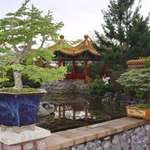 Bonsai Trees/pagoda
