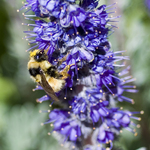 Busy as a bee!
