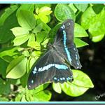 Butterfly Beauty (1)