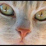 Sadie's Eyes