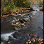Cataloochee Stream