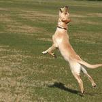 Ballet Dog