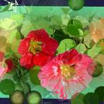 Nasturtiums/Floral Abstract 2