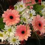 Gerbera Daisy Bouquets
