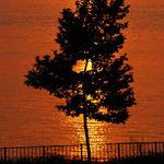 Golden silhouette