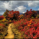 Graveyard Fields in Color