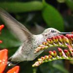 Hummingbird side view