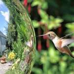 Hummingbird & Gazing Ball