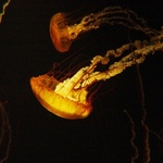 Eerie Jellyfish