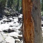 Bear Sign - Stillwater River Canyon