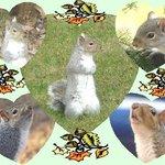 Squirrel collage