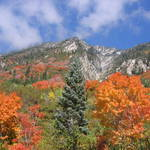 Rocky Mtn. Fall Colors