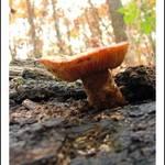 Fungi among I