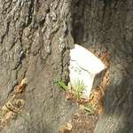 Tomb In A Tree