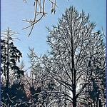 Fairy tale of winter night