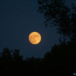 "Orange ""Harvest"" Moon"