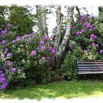 Our Garden Seat