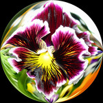 Pansy Abstract