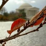 DC Autumn