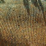 Iguana Beads