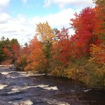 River Foliage