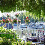 River House boats & river thru a Willow Curtain