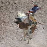 Riding High At The Rodeo
