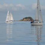 sailing at wellington