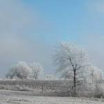 It snowed today!