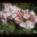 Flowers soft focus