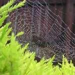 Arachnid Artistry