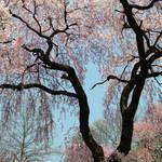 Springtime Wonder