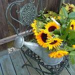 Sunflowers on Chair
