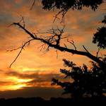 Sunrise Branch