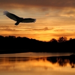 Buzzard Sunset