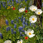 Texas Wildflower Bouquet