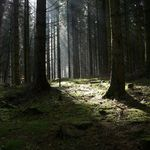 The light in the wood