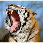 Roar!!