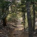 Deep Dark Trail