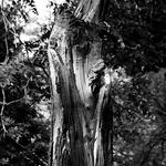 Tree of Sadness